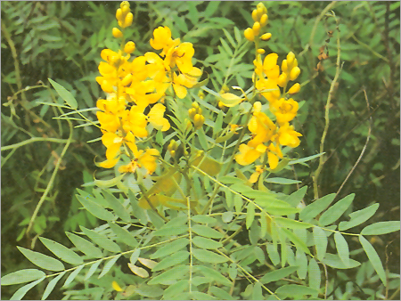 Conservation and preservation of medicinal plants-leads from Ayurveda and Vrikshayurveda