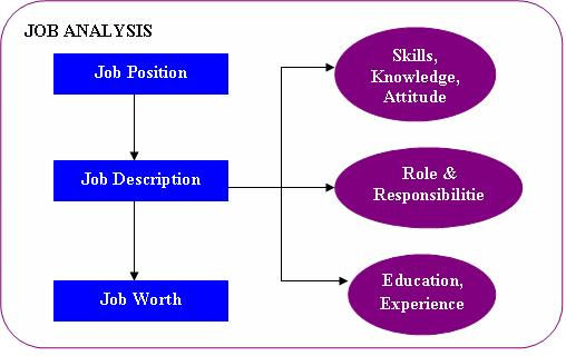 Compensation and benefits tutorial job analysis role of job analysis ccuart Images
